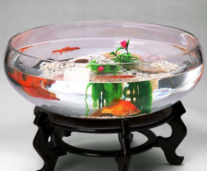 【鱼缸知识百科】鱼缸的详细分类大全