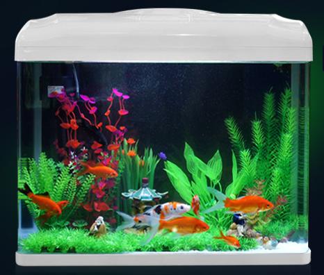 养鱼新手如何选择鱼缸 以下7点值得借鉴