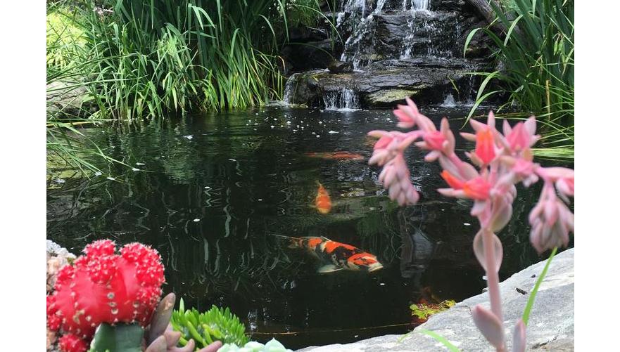 锦鲤鱼池过滤器的优势